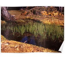 Reeds in Pool of Bethesda Poster