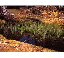 Reeds in Pool of Bethesda Photographic Print