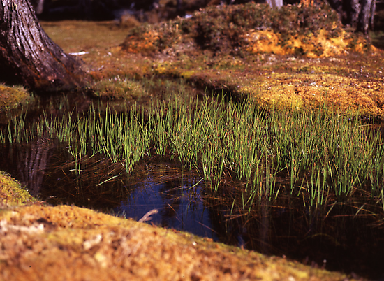 Reeds in Pool of Bethesda by Damien Hingston