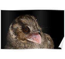 Australian Owlet-NightJar Poster