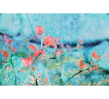 Blossom and Leaves Photographic Print