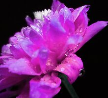 Spring flower. by Vitta