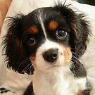 Charlie Girl (Charlotte Rose) at 10 weeks old by AnnDixon