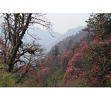 Springtime near Tadopani, Nepal Photographic Print