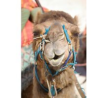 Victor Harbor Camel - in your face Photographic Print