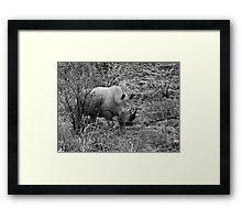 Rhino, Pilanesberg Park, South Africa Framed Print