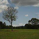 Landscape at Riverdale Park by S S