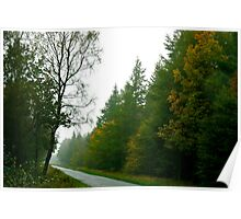 Forest Drive - Dalby Forest Poster