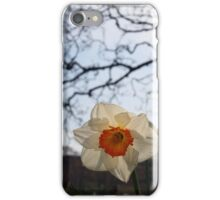 Easter Daffodills iPhone Case/Skin