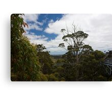 Valley of the Giants Canvas Print