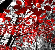 Red by colepittman