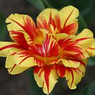 Monsella Double Tulip by Monnie Ryan