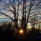 Winter Sun by Sarah Fulford