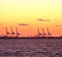 Cranes of New York by Dandelion Dilluvio