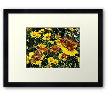 Orange Butterflies on Yellow Coreopsis Framed Print