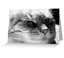 Momma Kitty in Black and White Greeting Card