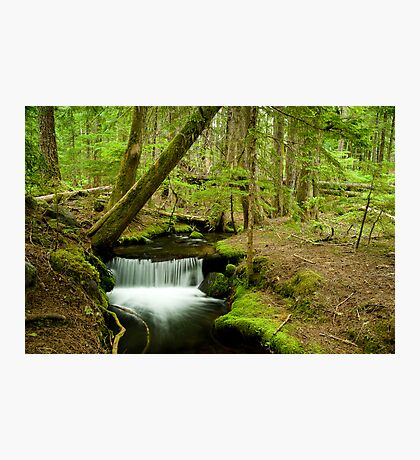 Ramona Creek Photographic Print