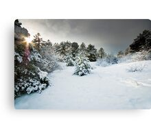 Lost On a Winter's Day Canvas Print