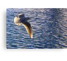 Flying across water (seagull) Canvas Print