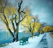 Lakeshore Walkway in Winter by Tara  Turner