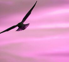 Inner Peace. Water Colour Seagull. by L. Haverkamp