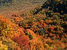 Fall Impressions by NatureGreeting Cards ©ccwri