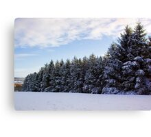 Snowy Pines Canvas Print