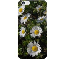 English daisies iPhone Case/Skin