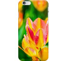 Tulips Enchanting 36 iPhone Case/Skin