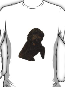 Cute and Curly Shih-Poo Puppy T-Shirt