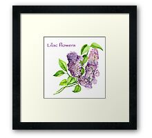 Blooming lilac branch pattern. Pink and violet watercolor flowers . Floral pattern.  Framed Print