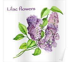 Blooming lilac branch pattern. Pink and violet watercolor flowers . Floral pattern.  Poster