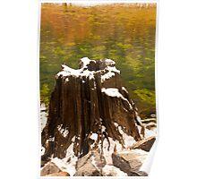 Old Tree Stump Poster
