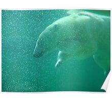 Polar bear - Philadelphia Zoo Poster