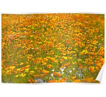 Californian Poppies Poster