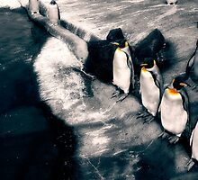 Lined up penguins by bright--eyes