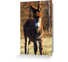 Cute & Silly...... Greeting Card