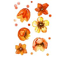 Watercolor isolated tulips and red watercolor splashes.  Photographic Print