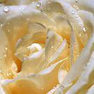 Freshness in white by sstarlightss