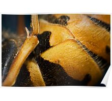 Wasp Study 1 Poster