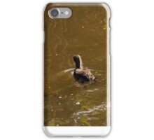 Coot with young Coot iPhone Case/Skin