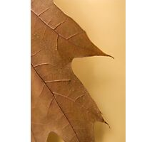 Oak on Parchment Photographic Print