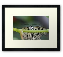 Hello Butterfly Framed Print
