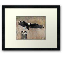 Eagle Attack Framed Print
