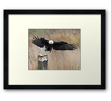 Eagle Attack Framed Print