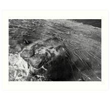 Shattered Ice Art Print