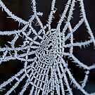 Frozen Web by Nigel Bangert