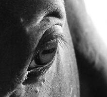 Bentley's Stare - Percheron/Paint Horse by Michelle Garrison