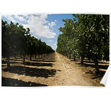 Pistachio Orchard Poster