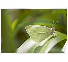 Butterfly Dreaming Poster